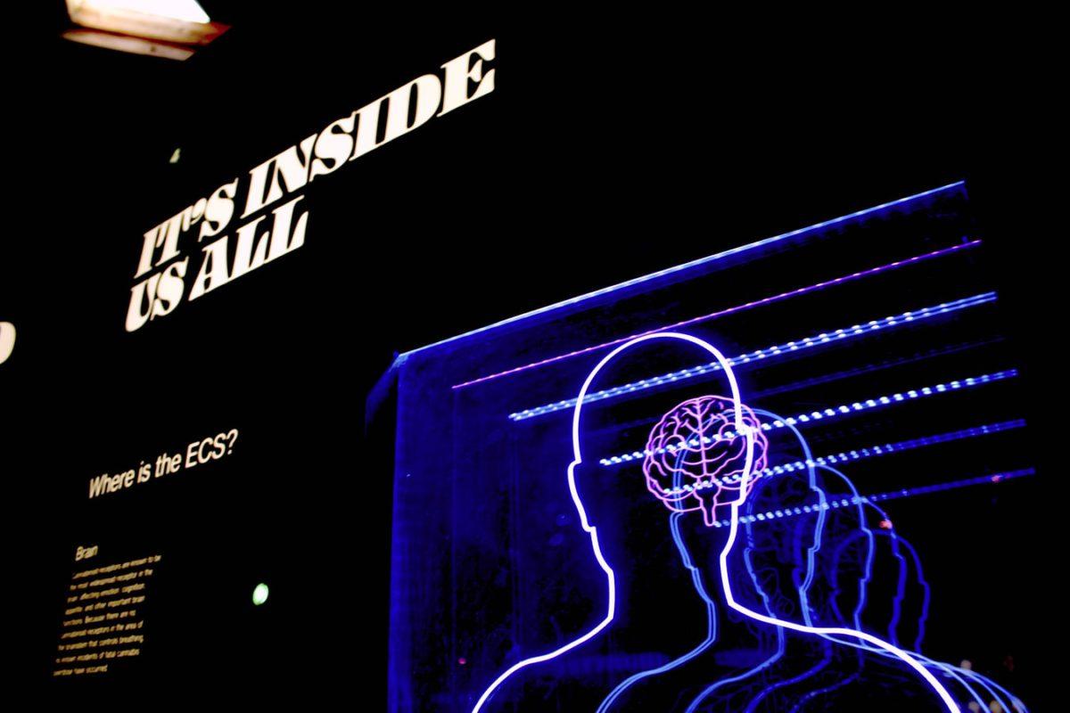 【心理言語学】英語ネイティブは英語をどのように脳内処理してる?